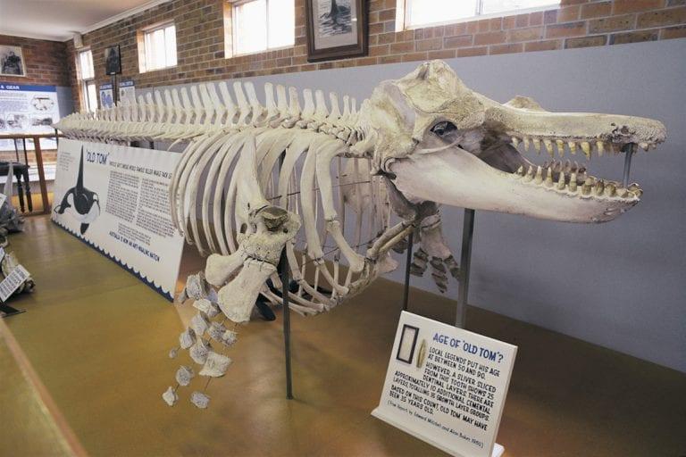 Eden Whale Museum Sapphire Coast CREDIT Nick Rains Destination NSW
