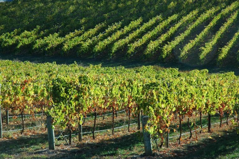 the amazing adelaide hills a family guide to the region