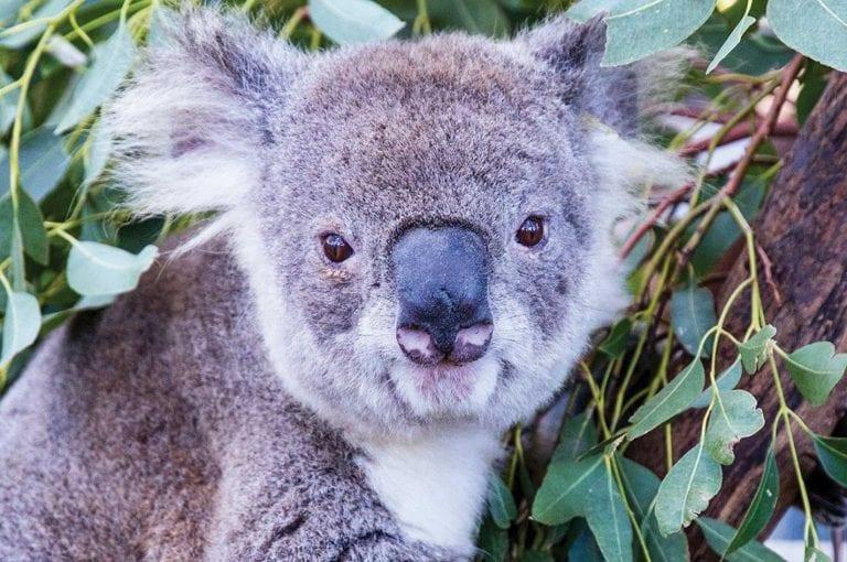 Visit Port Macquarie Koala Hospital 2