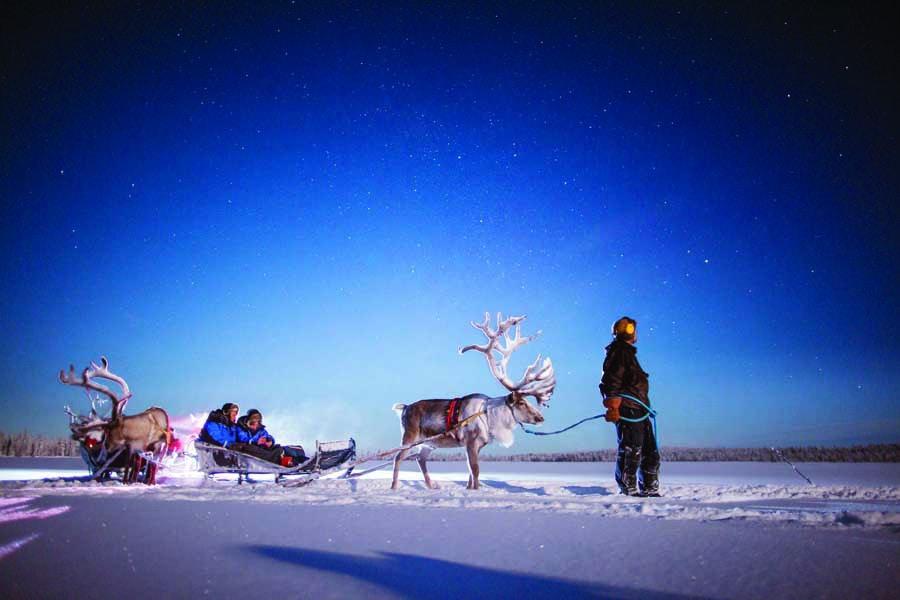 harriniva hotels safaris reindeer 12