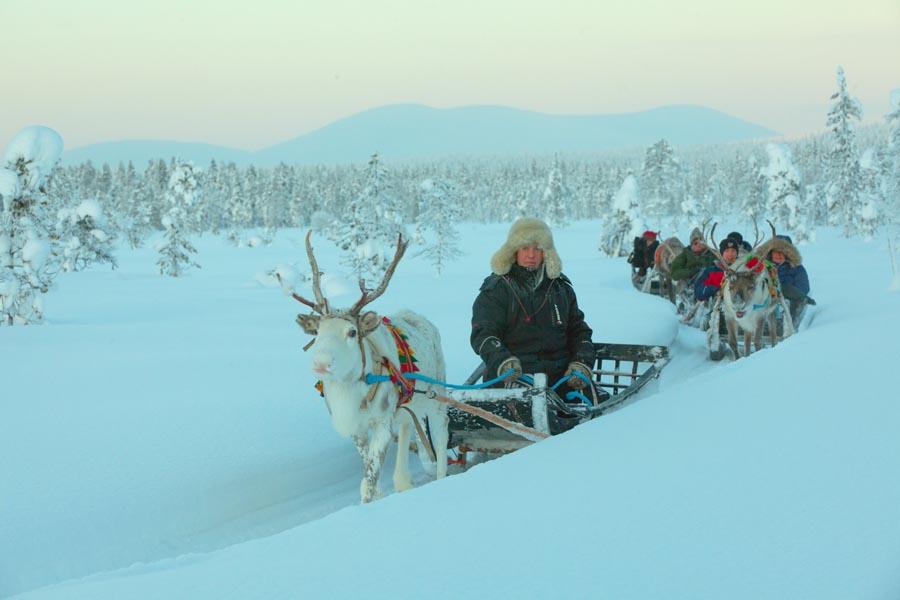 harriniva hotels safaris reindeer 15