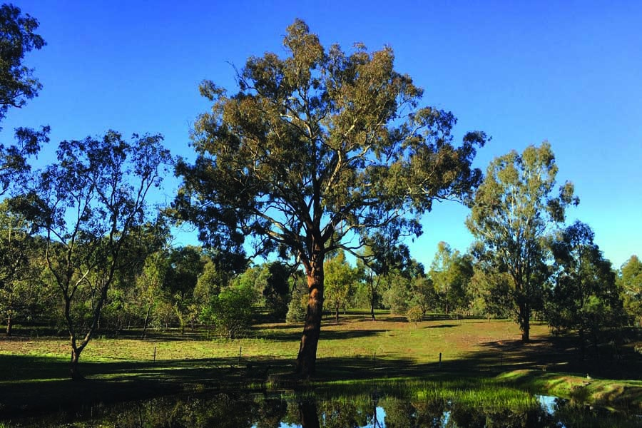 majura nature reserve in the act