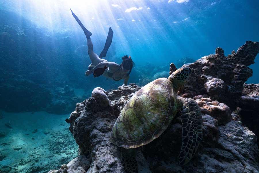 snorkelling with green sea turtles. image ariki adventures