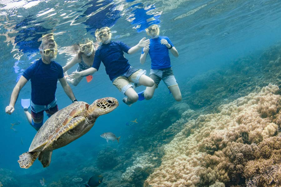 a family swimming with turtles on great barrier reer with sunlover reef cruises image tourism and events queensland