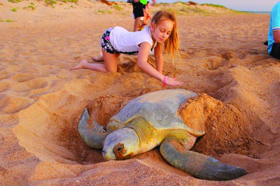 a turtle encounter on bare sand island. image tourism nt aude mayans