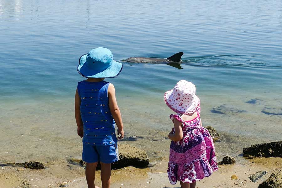 crop out industrial buildings. get up close to dolphins at adelaide dolphin sanctuary. image marianna boorman