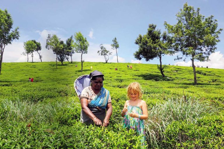 feature picking tea at nuwara eliya