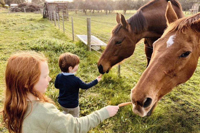 feature the kids feeding the horses