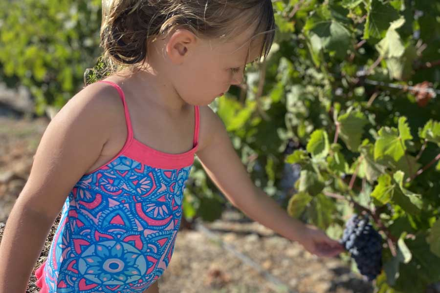 leni picking grapes at anemi hotel on folegandros