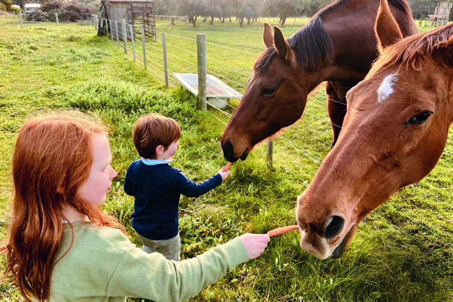 the kids feeding the horses in the farm