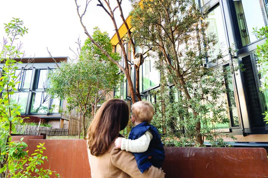 see koalas right outside the door during a stay at taronga wildlife retreat