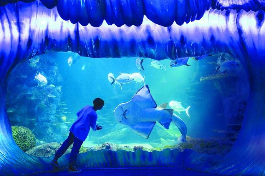 a child meeting the shark ray bowie at sea life sydney aquarium. image destination nsw