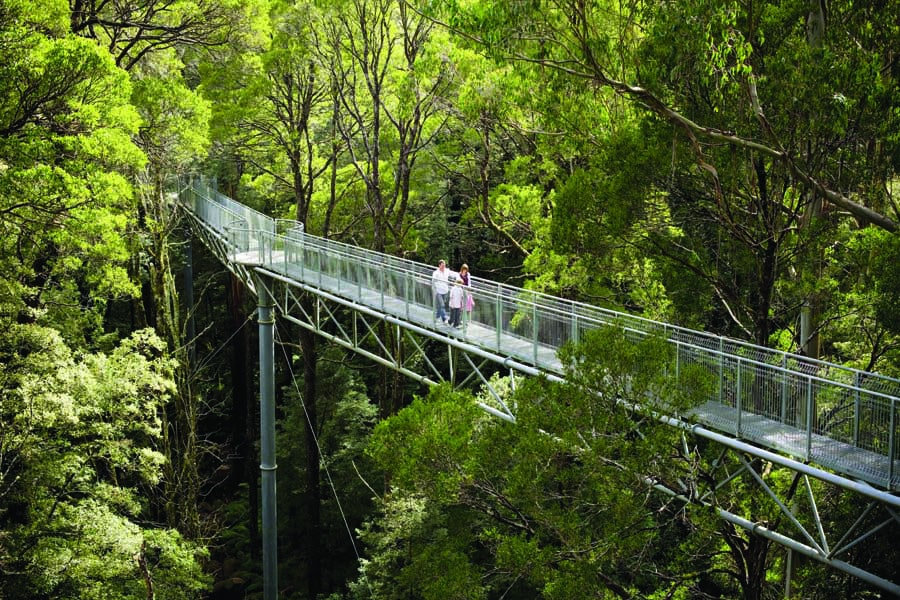 a family at otway fly treetop adventures. image visit victoria