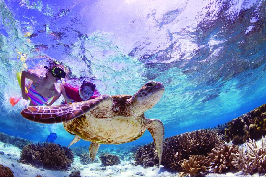 kids swimming with a turtle off lady elliot island. image tourism and events queensland