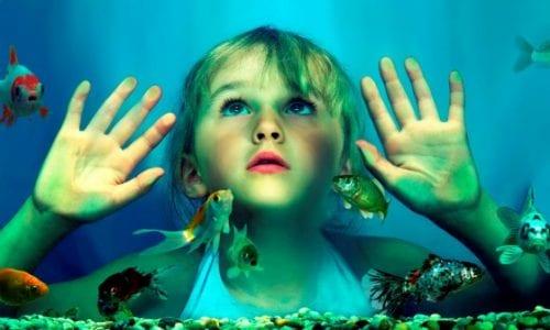 Austraia Melbourne Aquarium vert redux hero