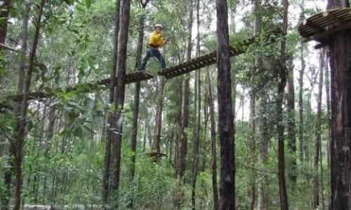 Blog Central Coast Treetop Adventure Land redux1
