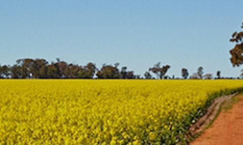 Coolamon region East Riverina DNSW