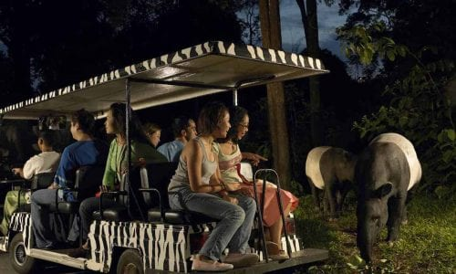 Dont miss the Night Safari CREDIT Singapore Tourism