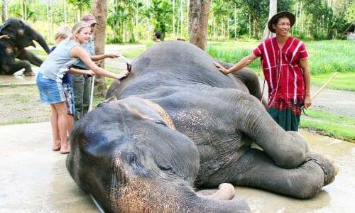 Elephant Hills washing elephants 6279 credit Deborah Dickson Smith