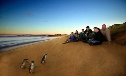Phillip Island Penguin Parade beach copy
