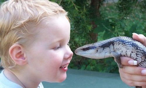 Q hero Feature Creature Boy Lizard