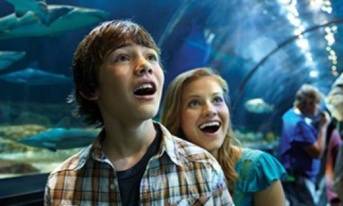 Sea World Shark Encounter Tunnel tweens Thumbnail