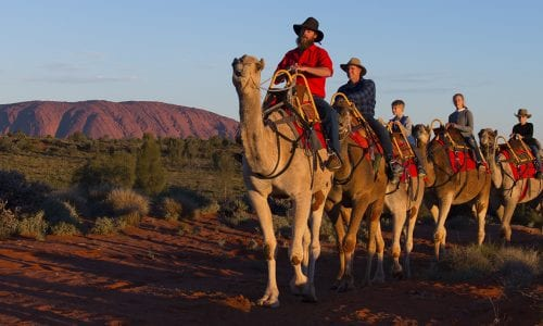 Uluru Camel Tours 4 1150x860pxl