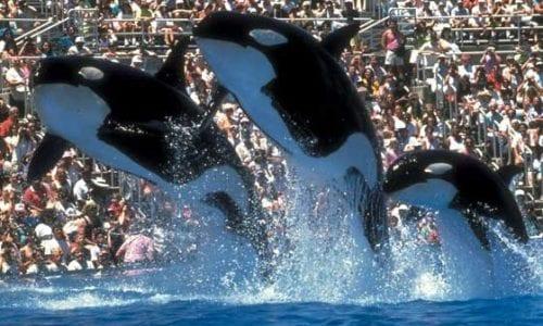 dolphins OC