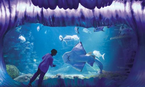 feature a child meeting the shark ray bowie at sea life sydney aquarium. image destination nsw