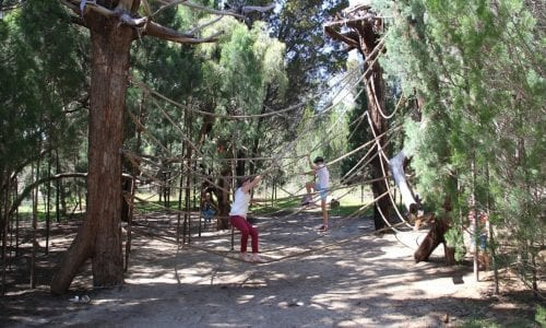 fun things to do at kings park in perth