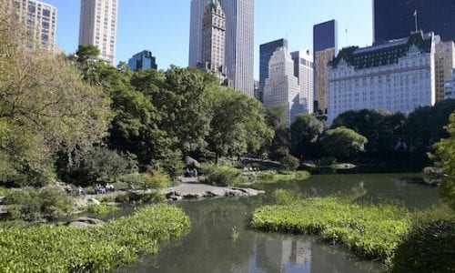 pond at 59th st alexlopez2